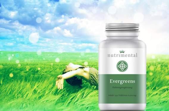 basisversorgung-evergreens-gerstengras-tabletten